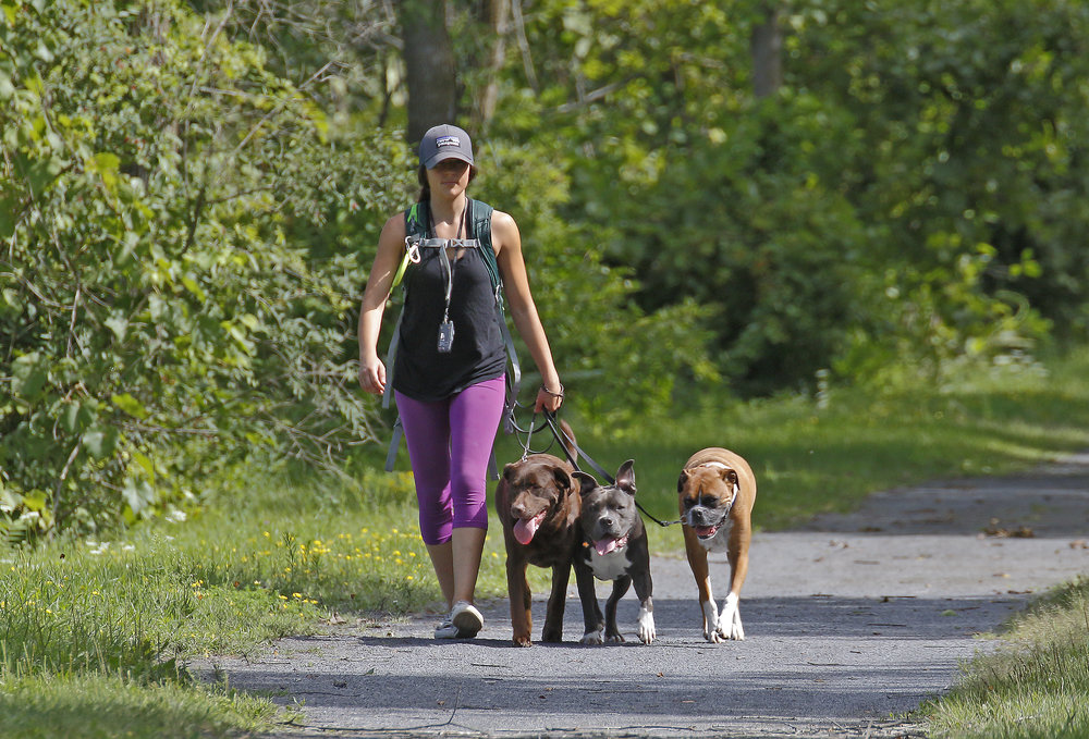 DOG WALKING - THE NEIGHBORHOOD WALK:PRIVATE AND ON LEASH WALKS ARE A GREAT OPTION FOR DOGS LACKING IN OFF LEASH RELIABILITY AS WELL AS DOGS/PUPPIES WHO ARE CRATED FOR A MAJORITY OF THE DAY. PRIVATE WALKS ARE A 30-45 MINUTE EXCURSION THROUGH YOUR SURROUNDING NEIGHBORHOOD. WE PROVIDE THE POOP BAGS AND FRESH WATER!3O MINUTE LEASH WALK : $20 ($10 PER ADDITIONAL HOUSEHOLD DOG)45 MINUTE LEASH WALK: $30 ($10 PER ADDITIONAL HOUSEHOLD DOG)45 MINUTE NATURE TRAIL WALK: $35 ($10 PER ADDITIONAL HOUSEHOLD DOG)_______________________________________TRAIN & WALK: Our TRAIN & WALK option is great for reactive dogs, nervous dogs and dogs/puppies that need a little extra practice with their leash skills and basic obedience commands . These walks offer mental stimulation for more active dogs. While on a walk, we focus on teaching and encouraging proper leash manners as well as focus on the handler through basic commands such as , sit, stay, down, come and heel - to create an engaging, fun , challenging walk that serves as a great learning opportunity for your dog and keeps them fresh with their basics and leaves them tired and content.30 MINUTE TRAIN & WALK: $2545 MINUTE TRAIN & WALK: $35_______________________________________**ADVENTURE DOG / OFF LEASH PACK (THURSDAYS )LIMITED SPOTS AVAILABLE**THIS OPTION INCLUDES FUN FILLED HIKES THROUGH THE BEAUTIFUL ADIRONDACKS AND SURROUNDING TRAILS IN THE LAKE GEORGE, GLENS FALLS AND QUEENSBURY AREAS. YOUR DOG WILL HAVE THE OPPORTUNITY TO OFF LEASH HIKE WITH OTHER FRIENDLY DOGS, SWIM, EXPLORE, PLAY AND ADVENTURE THROUGH MANY DIFFERENT TRAILS . THIS IS A NATURAL, BLISSFUL EXPERIENCE FOR ALL DOGS AND A GREAT WAY TO BURN OFF PENT UP ENERGY ! YOUR DOG MUST HAVE GREAT OFF LEASH/RECALL SKILLS AND OBTAIN GOOD CANINE SOCIAL SKILLS TO JOIN THIS PACK, IF YOUR DOG DOES NOT YET OBTAIN THESE SKILLS, PLEASE CHECK OUT OUR OBEDIENCE TRAINING PROGRAM OPTIONS AND LET US HELP YOU AND YOUR DOG ACHIEVE OFF LEASH OBEDIENCE AND BALANCE ! THE NORTH COUNTRY K9 CREW ALSO PROVIDES YOUR PET WITH FRESH WATER, DROP OFF AND PICK-UP AS WELL AS A QUICK RINSE OFF BATH UPON REQUEST!2-3 hour Day Trip : $35 per day5 DAY PACKAGE DEAL: $140 UP FRONT*Questions or concerns? Don't hesitate to contact us, here.