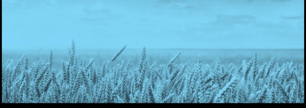 Blue Grain Fieldv2.png