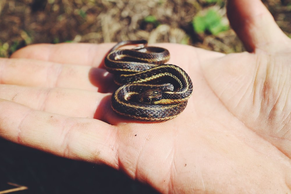 Little baby snek.