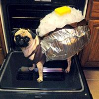 122b816dd77a7554c3a1ef3c8c7a9a30--baked-potatoes-pet-costumes.jpg
