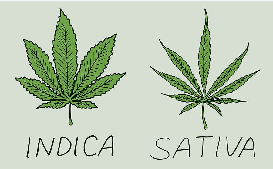 wsi-imageoptim-difference-between-sativa-and-indica-www.endoca.com_.jpg