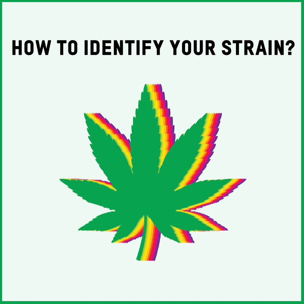 Featured Article - Indentifying Cannabis Strains