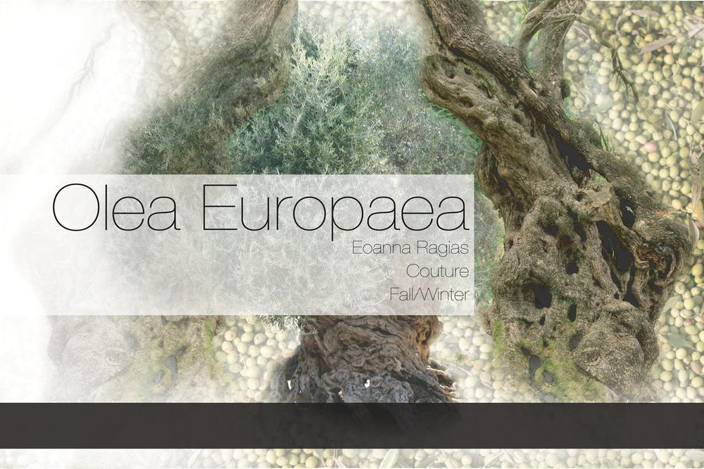 Mood-Board-Olea-Europaea.png
