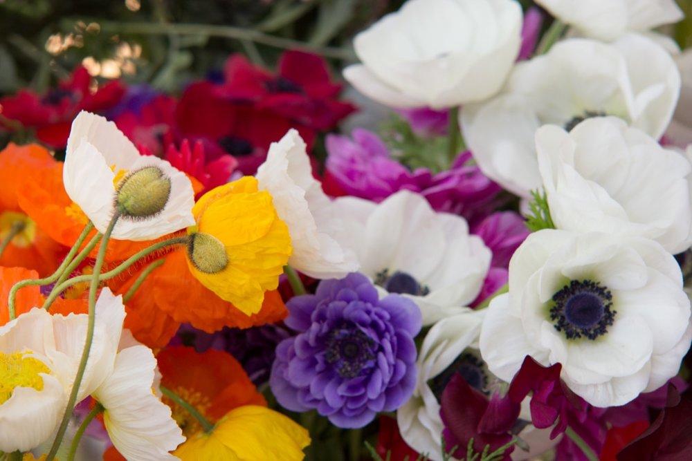 poppies & anemones.JPG