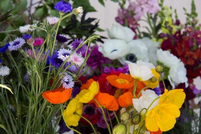 springflowers2017.4.jpg