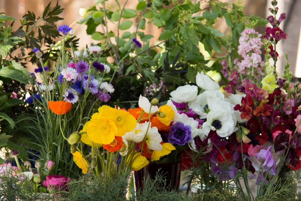 spring2017flowers.jpg