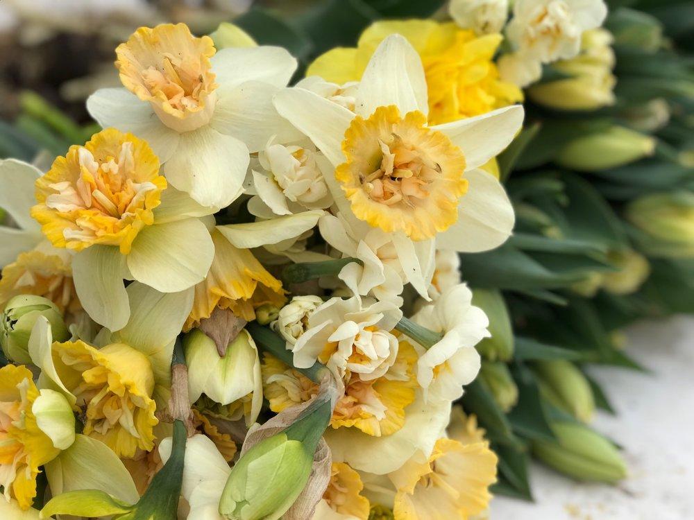 Daffodils2018cut.jpg