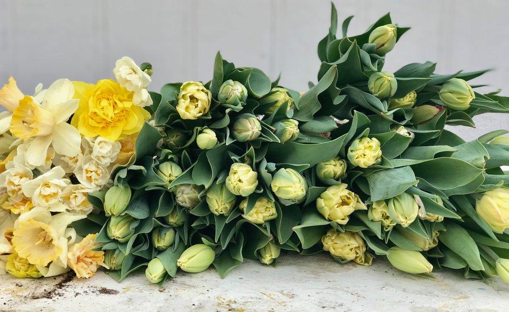tulipdaffs2018.jpg