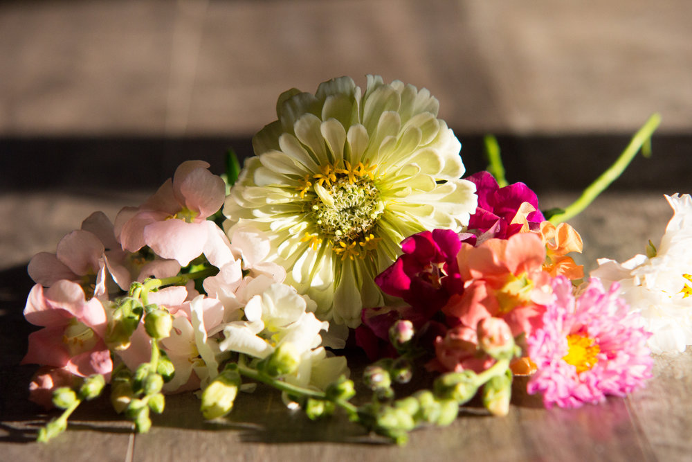 Flower Spotlight Zinnia Sierra Flower Farm