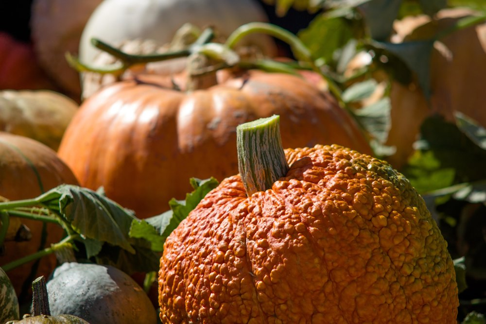 Can't wait for  Renner Farm  Pumpkins!