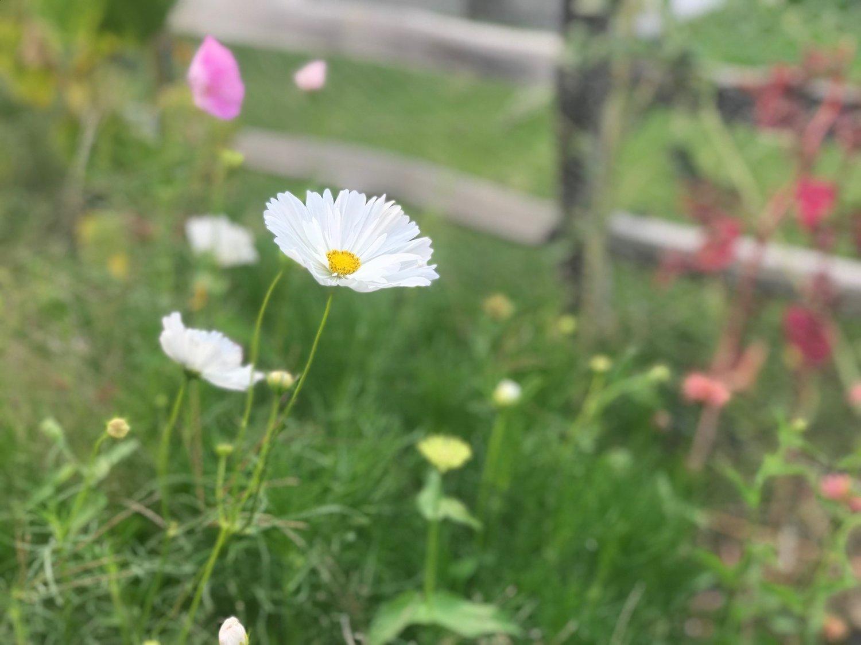 Summer Catch Up With The Farm Sierra Flower Farm