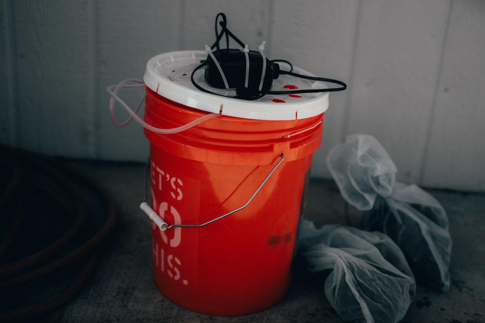 corm soaking bucket.jpg