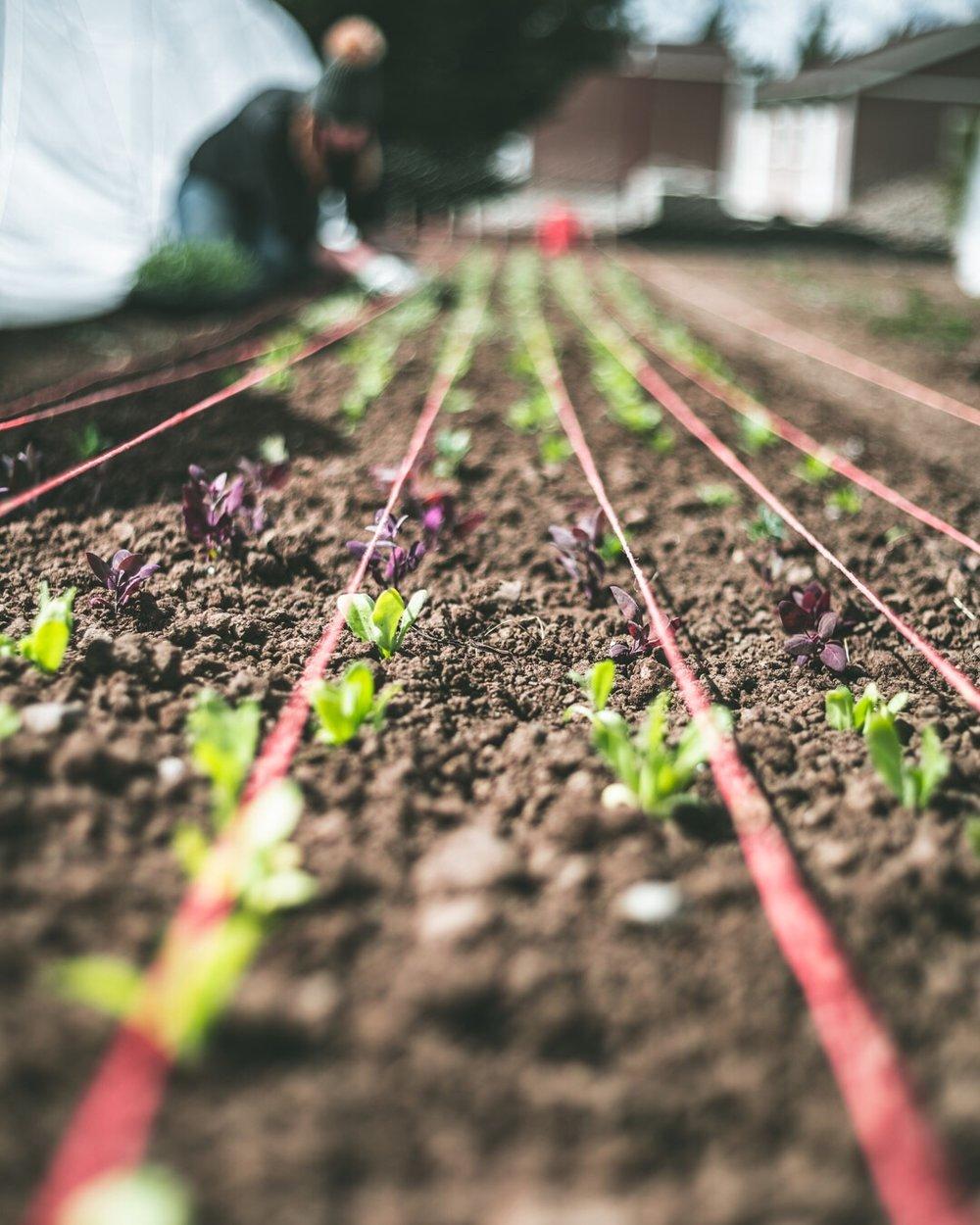 2019 april planting jess.JPG