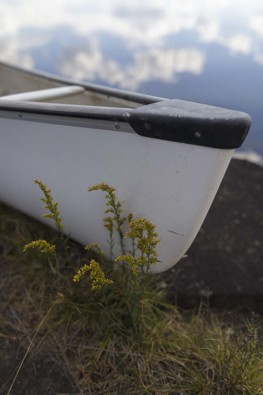 Canoe and flowers in Nopiming Provincial Park. An amazing afternoon paddling over glassy lakes.