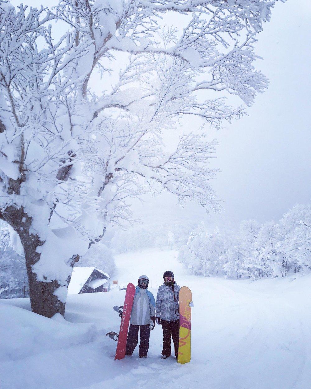 Snow Trees Madarao .jpg