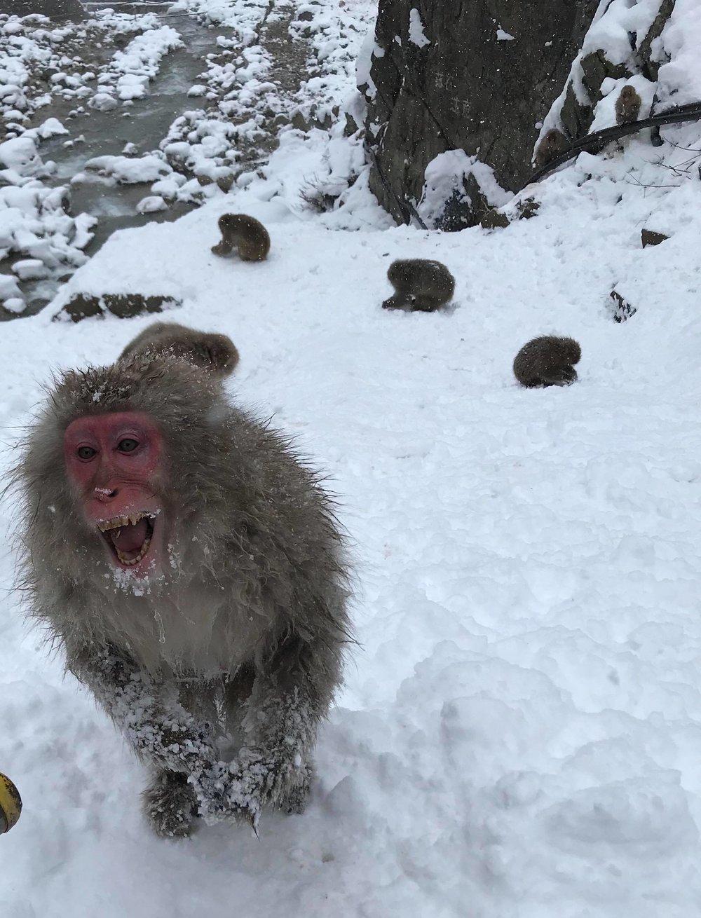 Happy Snow Monkey?
