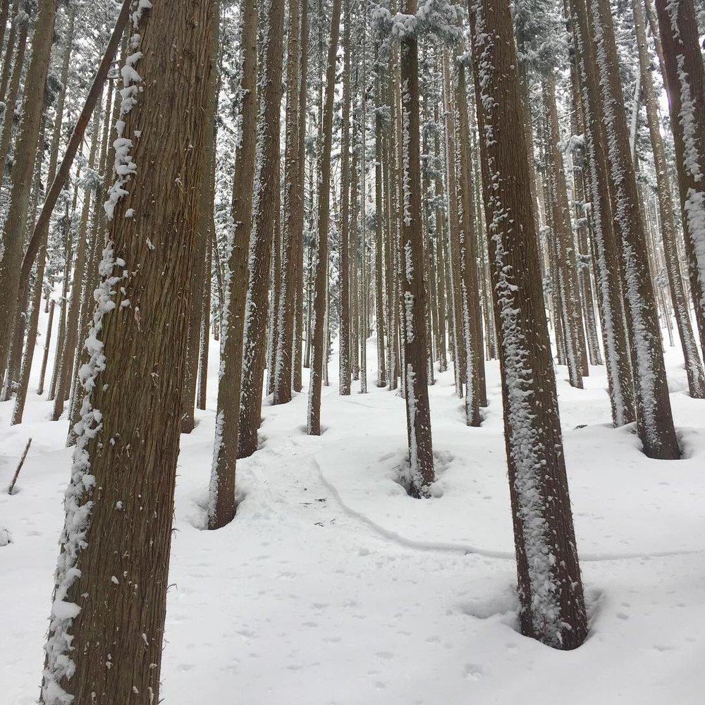 Nozawa Onsen Forrest
