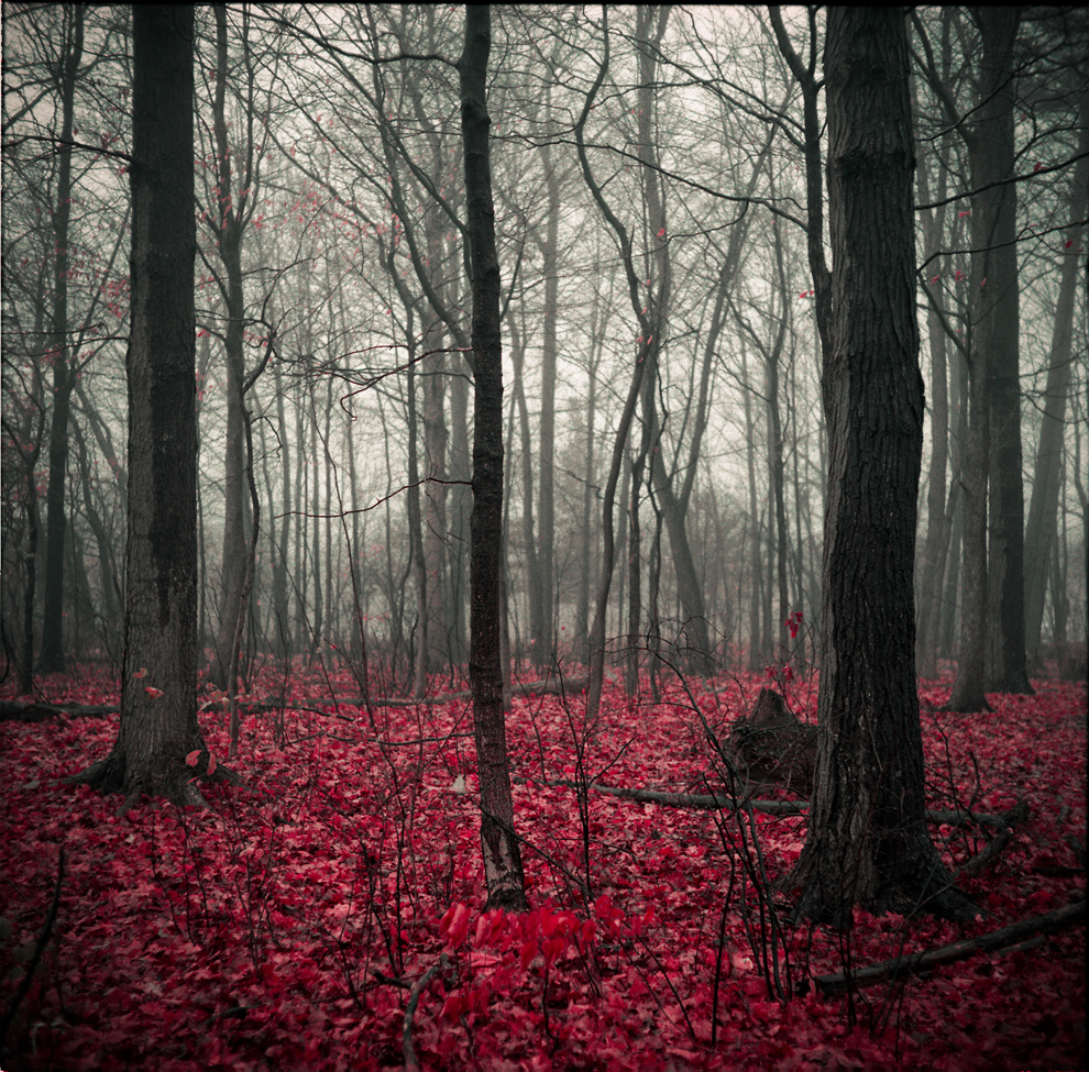 FLESH AND BONES: In a world where no one understands the importance of nature, all that is left of our nature is just these flesh & bones. Toronto, Canada. (Photo and caption by Amirhassan Farokhpour/Nature/National Geographic Photo Contest)     Hauntingly beautiful.   (via  National Geographic Photo Contest 2011 - The Big Picture - Boston.com )