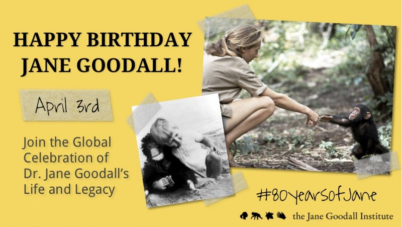JGI Jane Goodall's Birthday