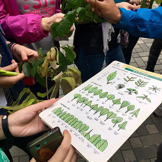 Who knew there were so many different shapes and types of leaves . Learn more with our #rootsandshoots #treesinthecity #城中樹木 training program