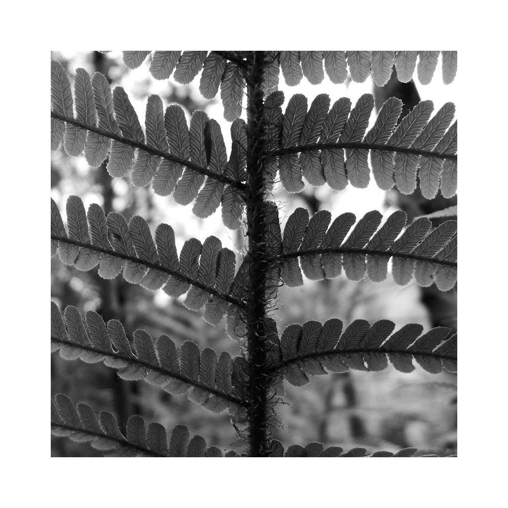 fern (17).jpg