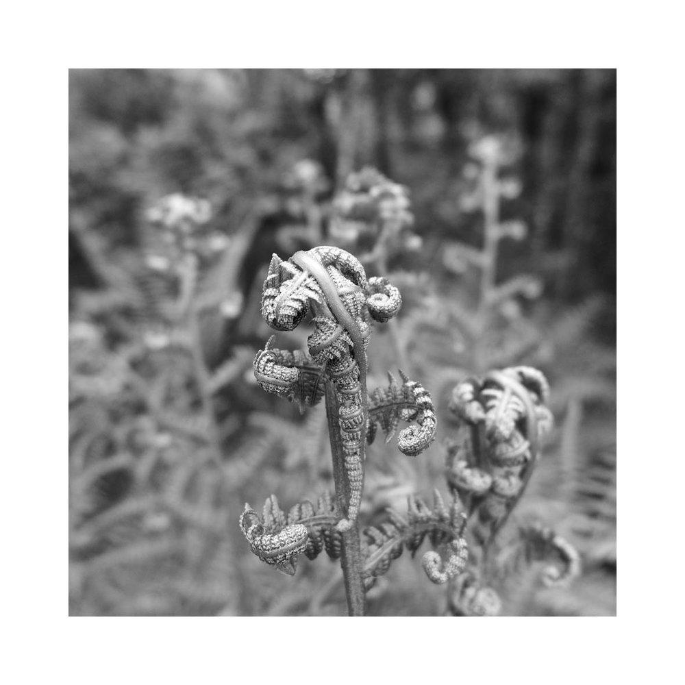 fern (15).jpg