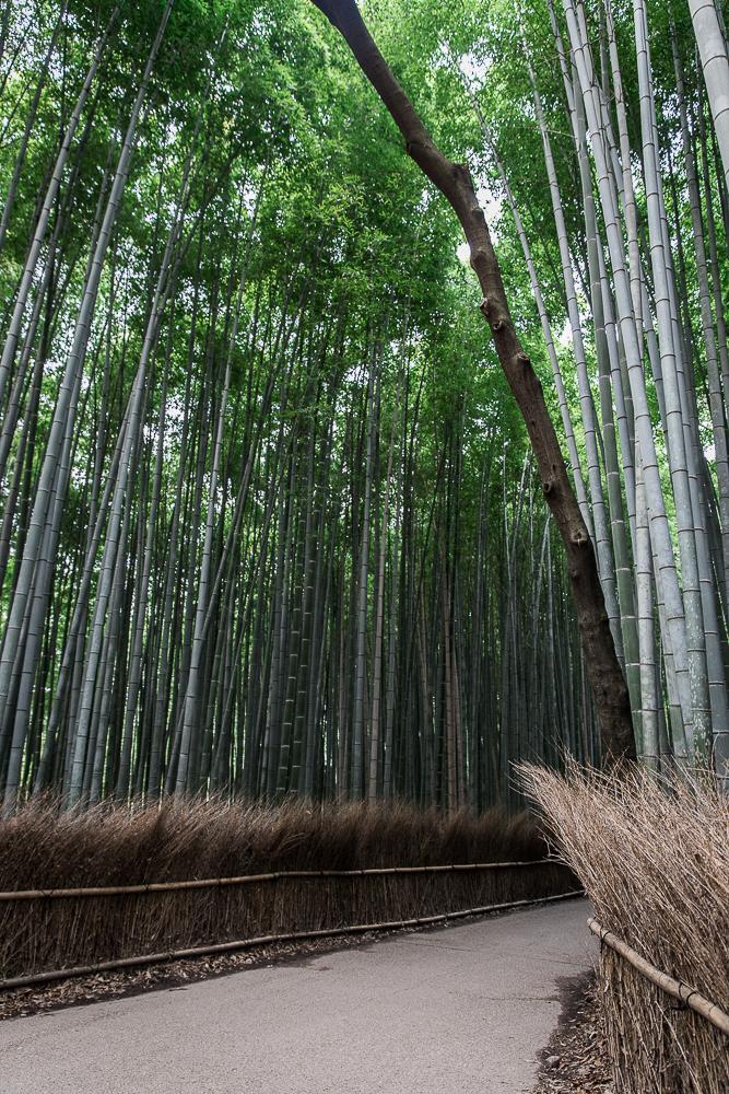 Danielle_Photography_SA39-Japan.jpg