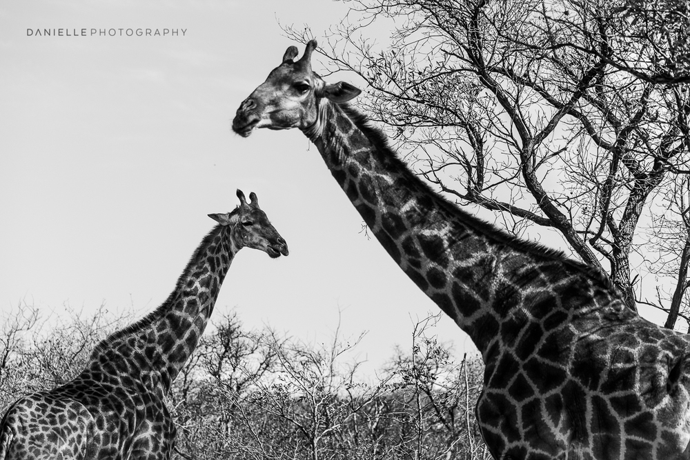 Danielle-Photography-SA-South-Africa38.jpg