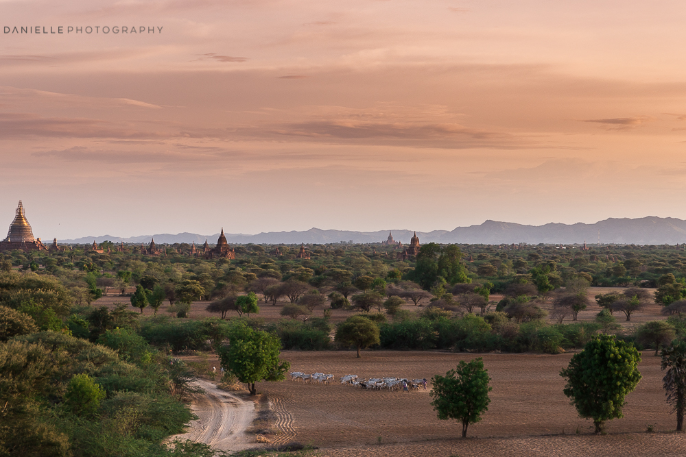 Danielle_Photography_SA71-Myanmar.jpg