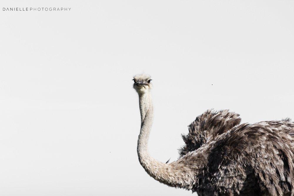 @DaniellePhotographySA_SOUTH AFRICA2.jpg