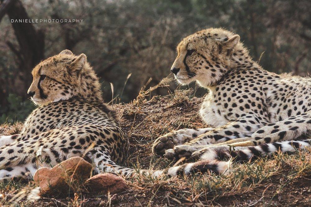 @DaniellePhotographySA_SOUTH AFRICA106.jpg