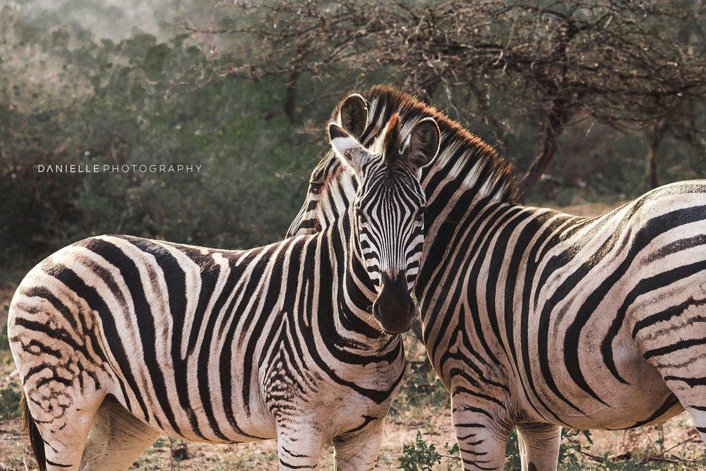 @DaniellePhotographySA_SOUTH AFRICA107.jpg