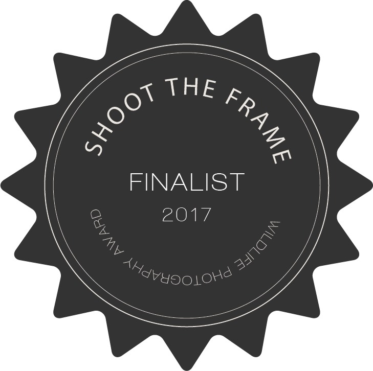 shoot_the_wild_finalist_badge_2017.png