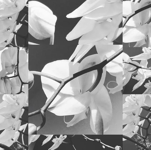 EndlessBloom2017PhotographEditionPrint_MarissaRobinAbendañoArt.jpg