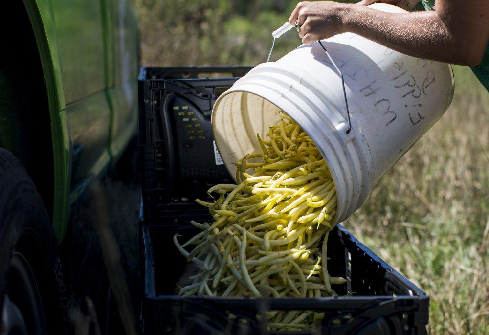 Photo:Ben McCanna, Portland Press Herald;Jordan's Farm, Cape Elizabeth.