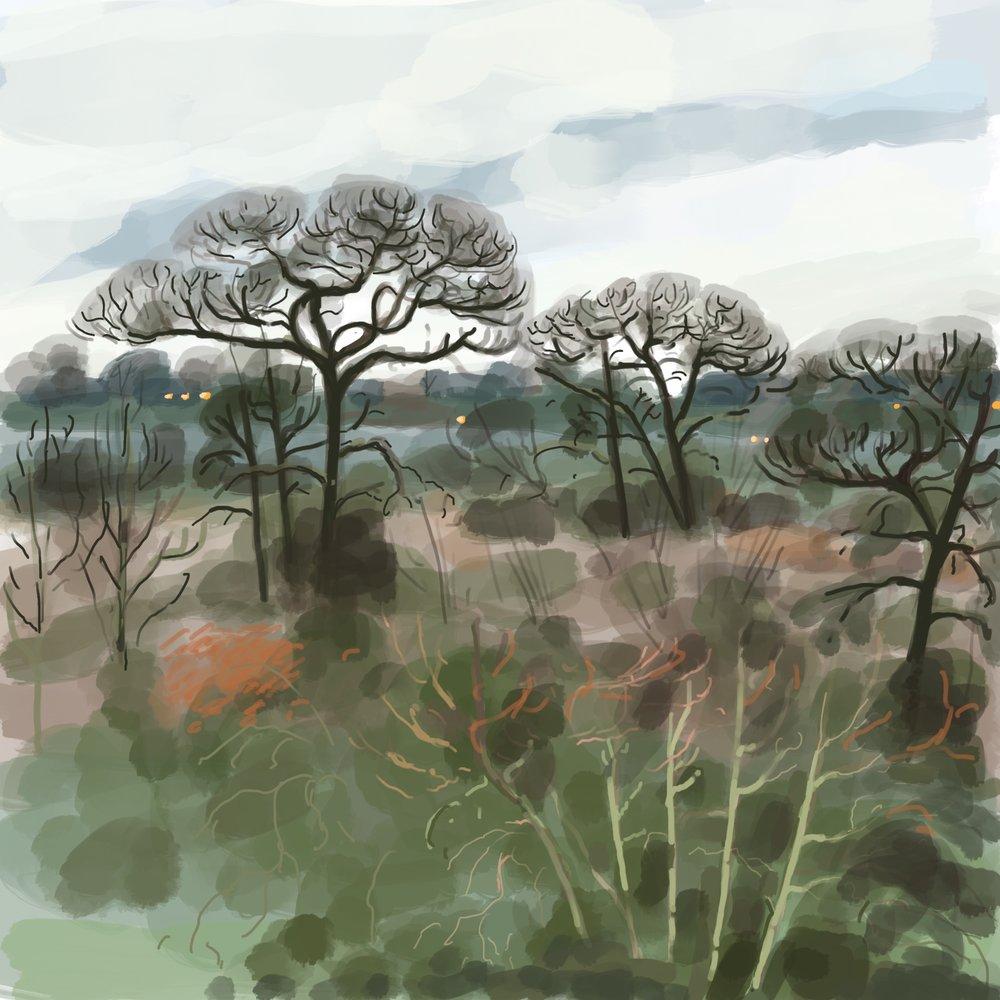 Looking towards Dacres Wood Nature Reserve, Sydenham
