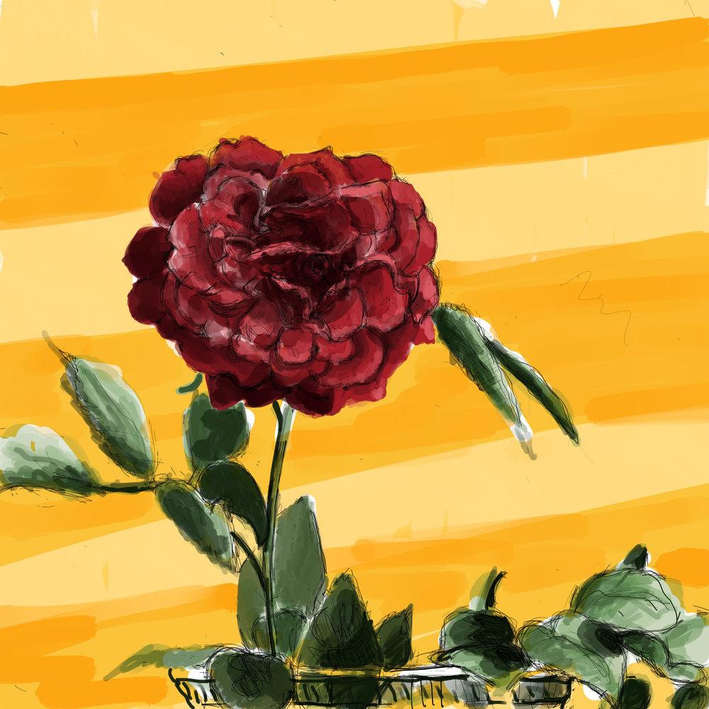 Darcey Bussell Rose V.1