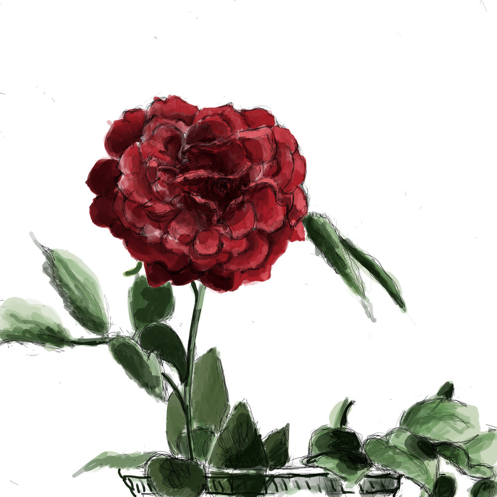 Rose without Background.jpg