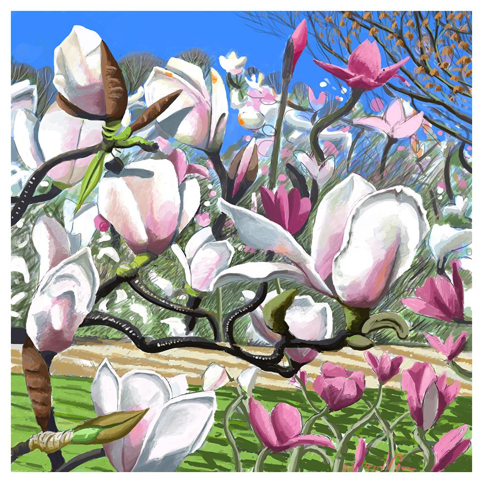 Magnolia Tree. Digital print