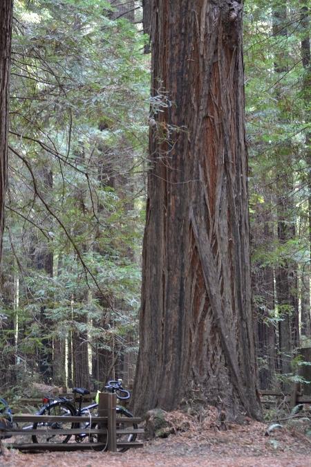 In Humboldt Redwoods State Park
