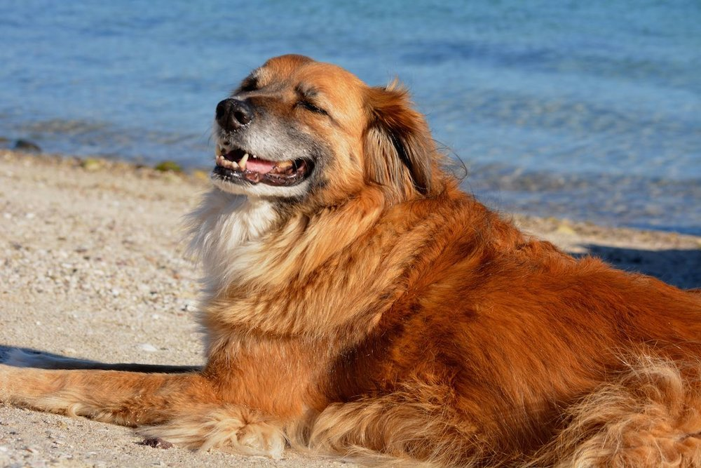 Indy is a very happy beach dog :)