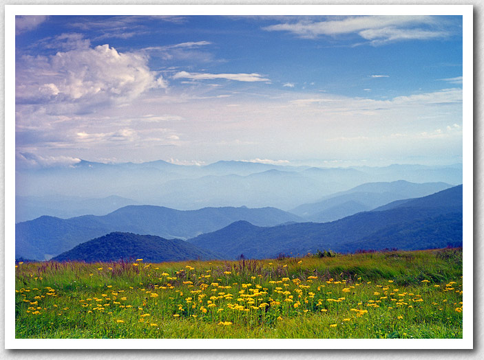 Come visit us this spring, and enjoy beautiful Roan Mountain, with alpine meadows in bloom.