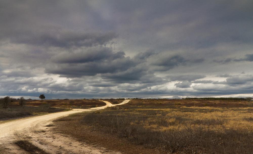 Chappaquiddick_Roads_Img_7928.jpg