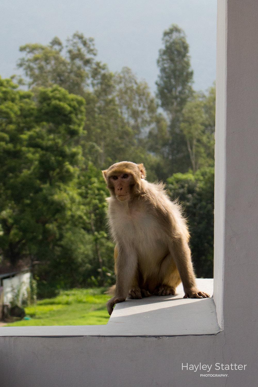 Rishikesh 06.16-3086.jpg