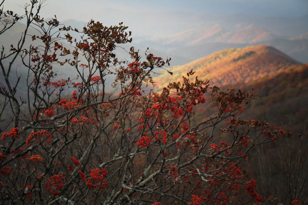 mountains-berries.jpg