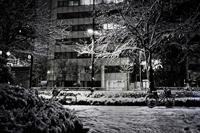 snowkyothumb.jpg