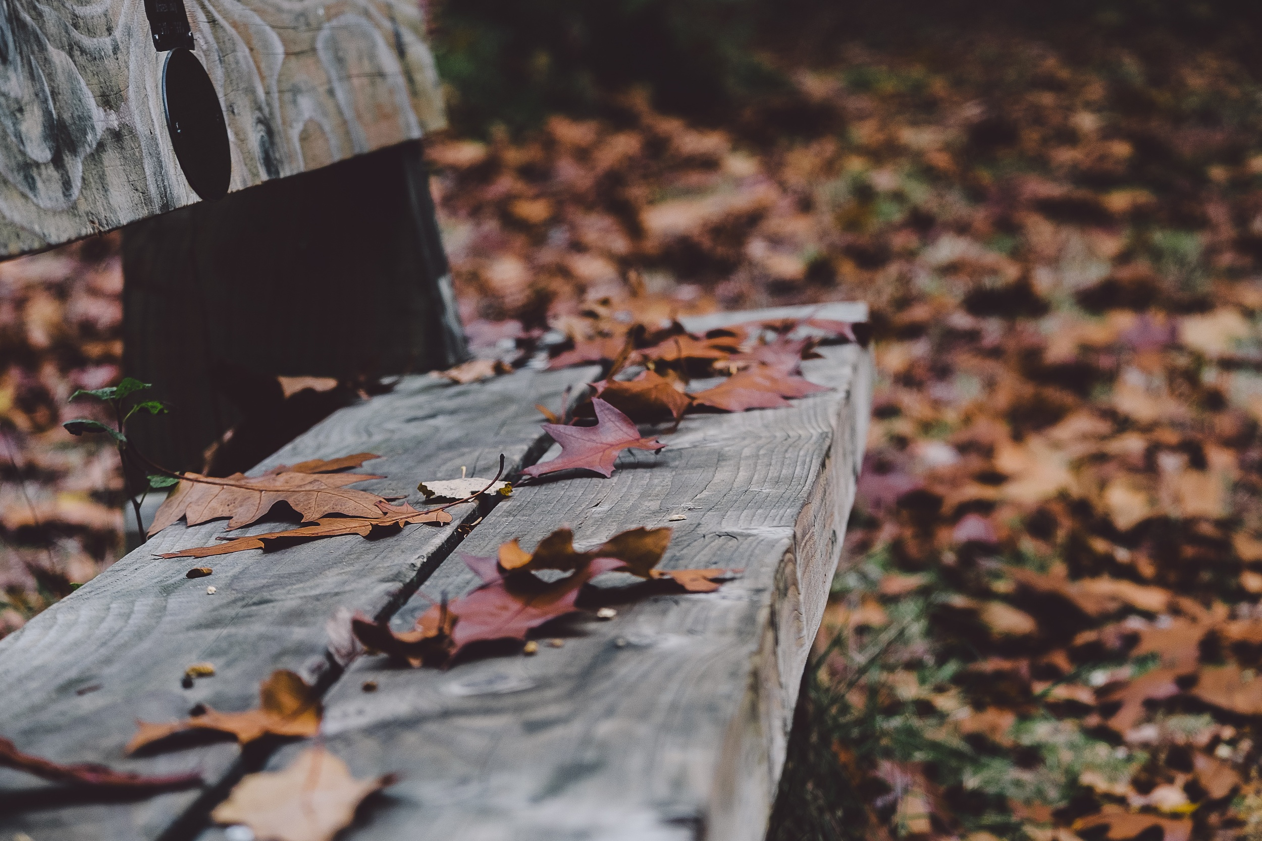 leaves_bench