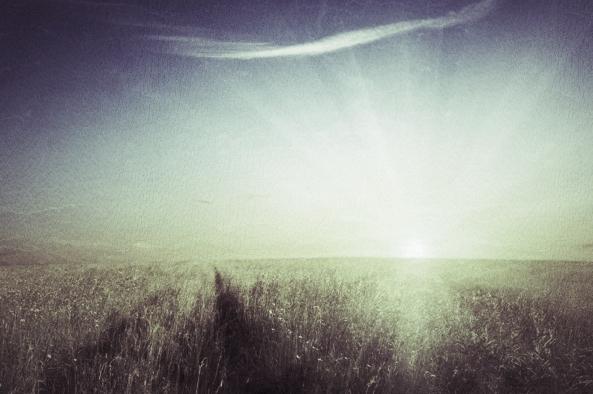 sunshine1.jpg