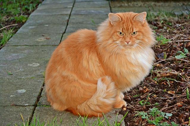 cats-1132409_640.jpg