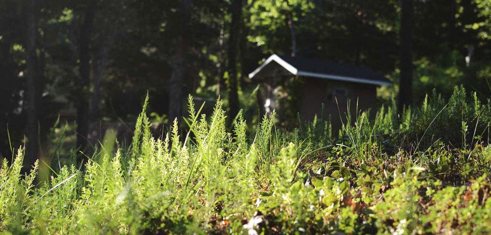 hempsley-cannabis-midwest-missouri-lake-ozarks